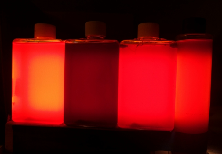 This photo shows my experimental Luminous Red PNSB Lamp, turned on, and viewed from the front in a darkened room. The bottles of PNSB culture are backlit by a flat white LED panel.
